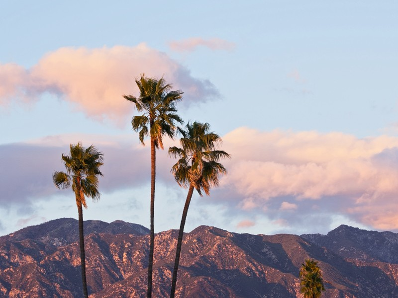 Palm trees and mountain in Southern California